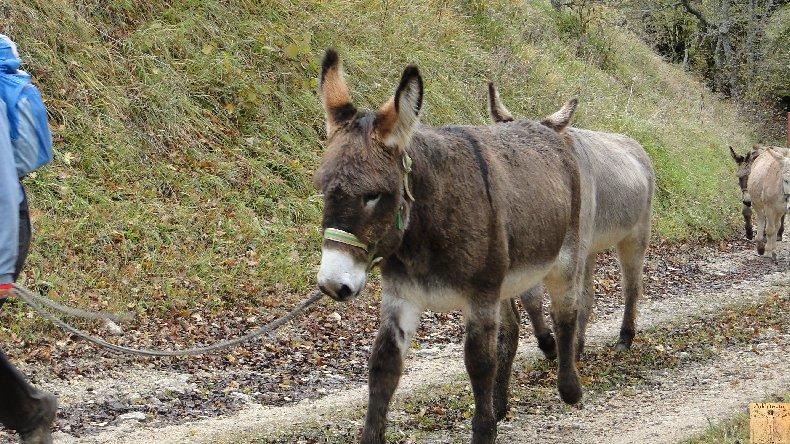 La 13 ème Transhum'âne - 30 - 31 octobre et 1er novembre 2010 0010
