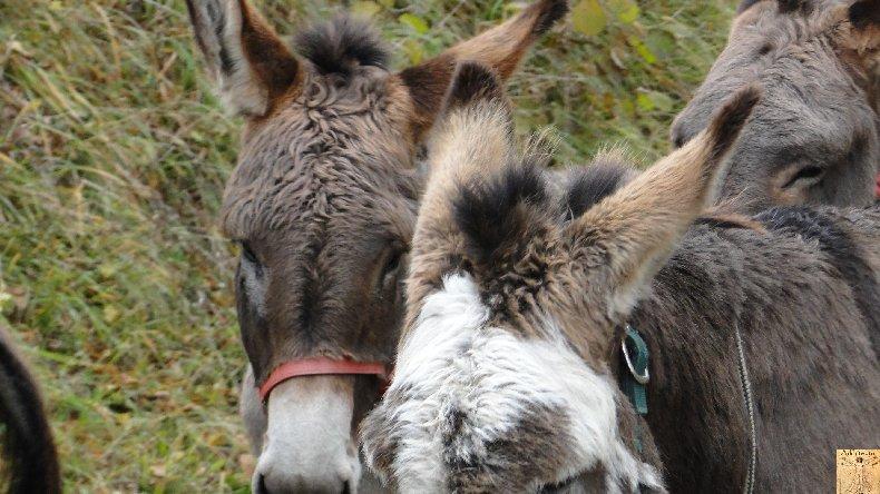 La 13 ème Transhum'âne - 30 - 31 octobre et 1er novembre 2010 0011